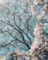 spring'