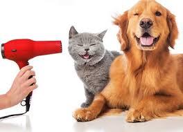 Global Pet Grooming Market'