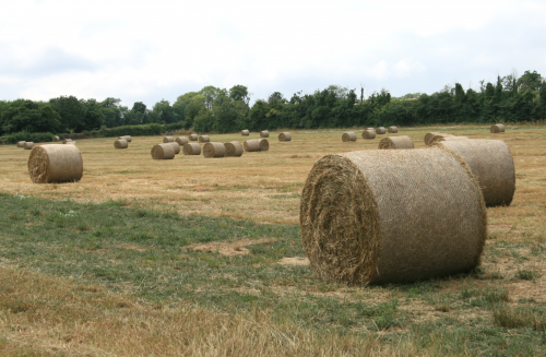 Silage Inoculant and Enzymes Market'