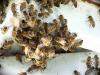 Termite Control Service Miami Dade FL