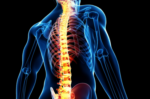 Spinal Cord Stimulation Market'