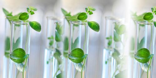 Bio-based Platform Chemicals Market'