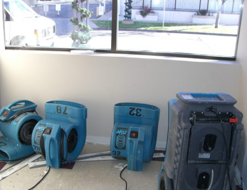 Mold Removal CO'