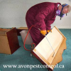Wasp Removal Vancouver'