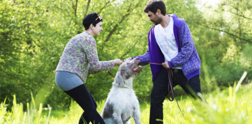 Report: Rise in Pet-Nuptial Agreements in New York'