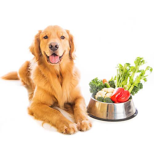 Pet Care Packaging Market'