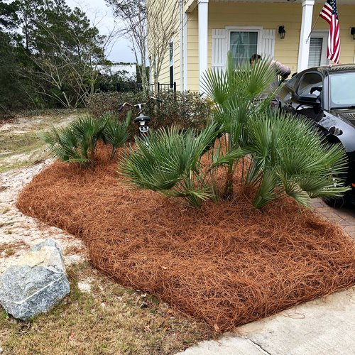 Colored Pine Straw'
