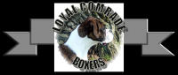 Boxer Puppies Arrive At Loyal Comrade Boxers