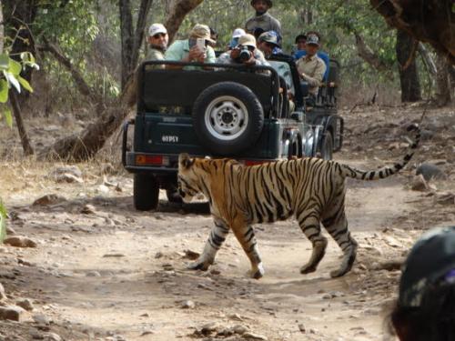 Tiger Conservation in Ranthambore National Park'