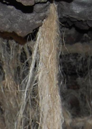 Flax fibers from cave site, Area C, Ararat.