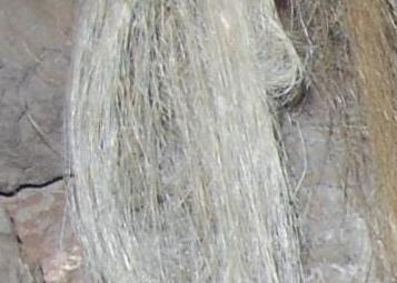 Strands of flax in cave site, Area C, Ararat.