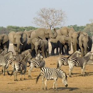 Best Accommodation in Victoria Falls'