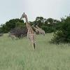 United Safari travel