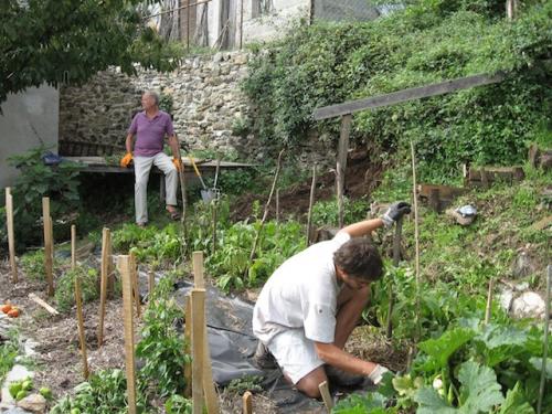 working_in_vegie_garden'