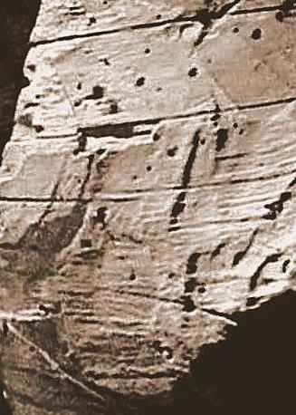 Adze marks on log in Locus 7, Area A, Ararat.