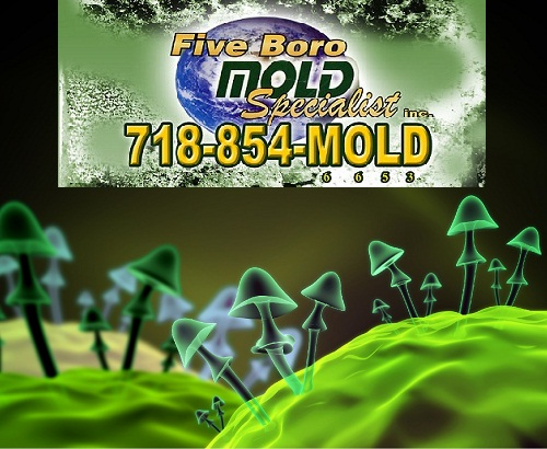 NYC mold Inspections - Five Boro Mold