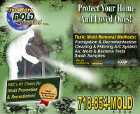 NYC Mold Removal Companies