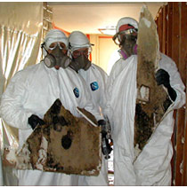 NYC Mold Inspection Services for Hurricane Sandy'