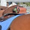 Horse Saddle Bags Australia'