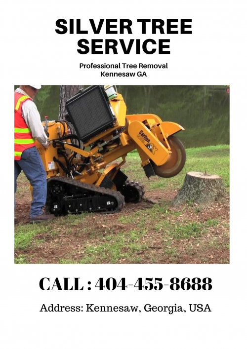 Professional Tree Removal in Kennesaw GA'