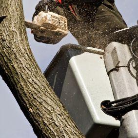 Tree Service'