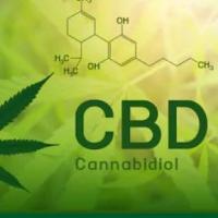 Hemp Cannabis Dispensary Logo