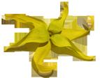Company Logo For Ylang Ylang Beach Resort'