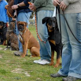 Dog Day Care'