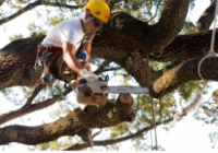 Tree Services Offered at Affordable Rates by Tree Removal Sa