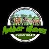 Amber Waves Pygmy Goats