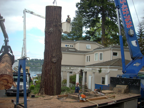 Tree Removal'