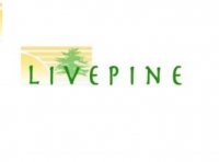 Live Pine Logo