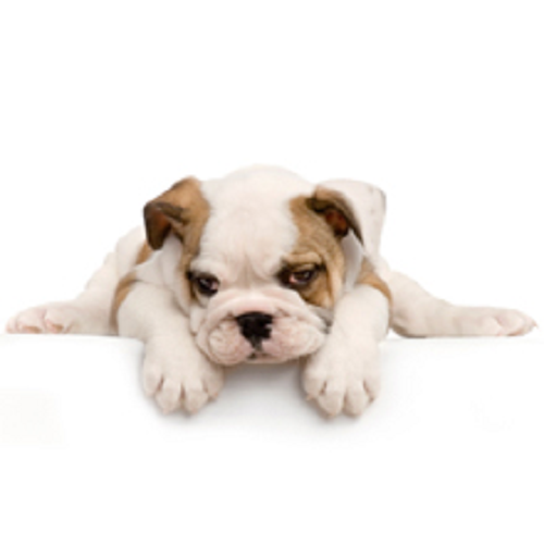 Company Logo For Fluffy Puppies of Pinellas Inc.'