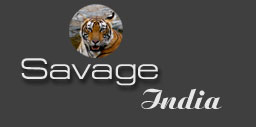 Logo for Savage India Ltd'