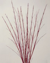 Red_Dogwood_-_Branch_Centerpieces.jpg