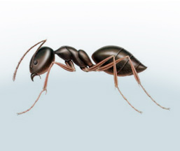 get rid of ants in the house'