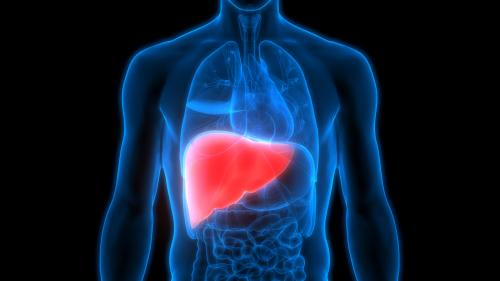 Liver Diseases Therapeutics Market'