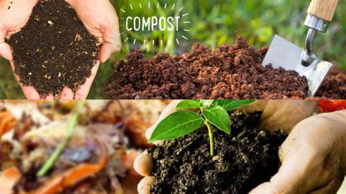 Bio Fertilizer Market'