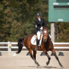 Equestrian Insurance Claims'
