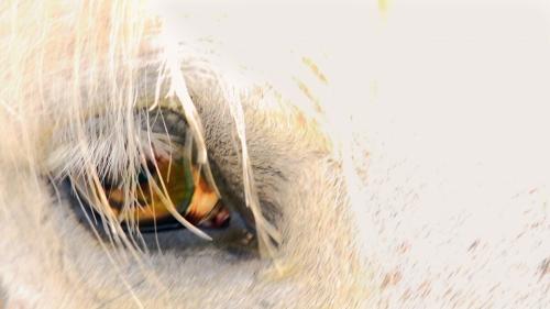 Animalia by Lindsay Ianna'