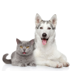 Groomit for Dogs and Cats'