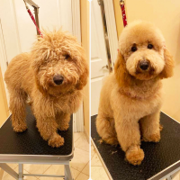 Groomit Before & After