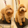 Groomit Before & After'