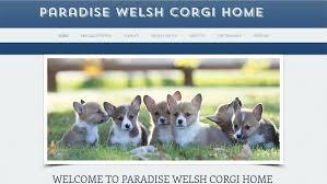 Company Logo For ParadiseWelsh Corgi Home'