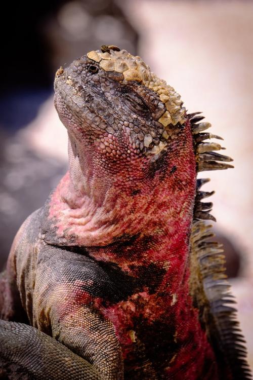 Iguana Repellant'