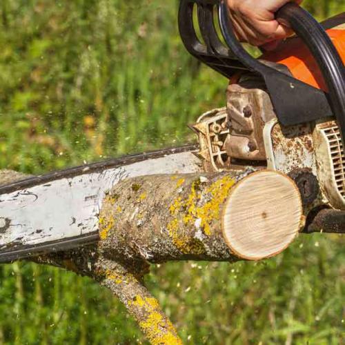tree removal Mississauga'