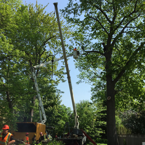 tree removal Mississauga'