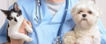Animal Health Services Market'