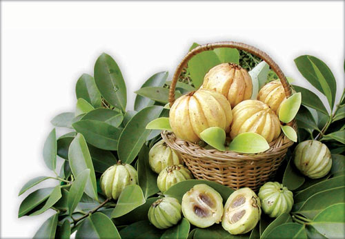 Garcinia Cambogia For Weight Loss'