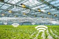 IoT Based Smart Greenhouse Market May Set New Growth Story |